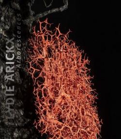 Lydie Arickx - Arborescences