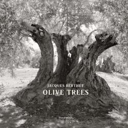 Olive Trees - Jacques Berthet