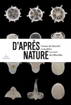 D'après nature, formes de Haeckel et modèles en verre des Blaschka