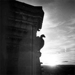 La cathédrale de Reims et son bestiaire
